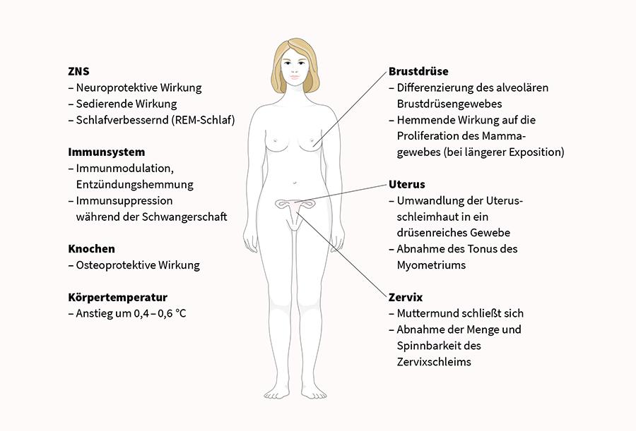 Progesteron auf einen Blick