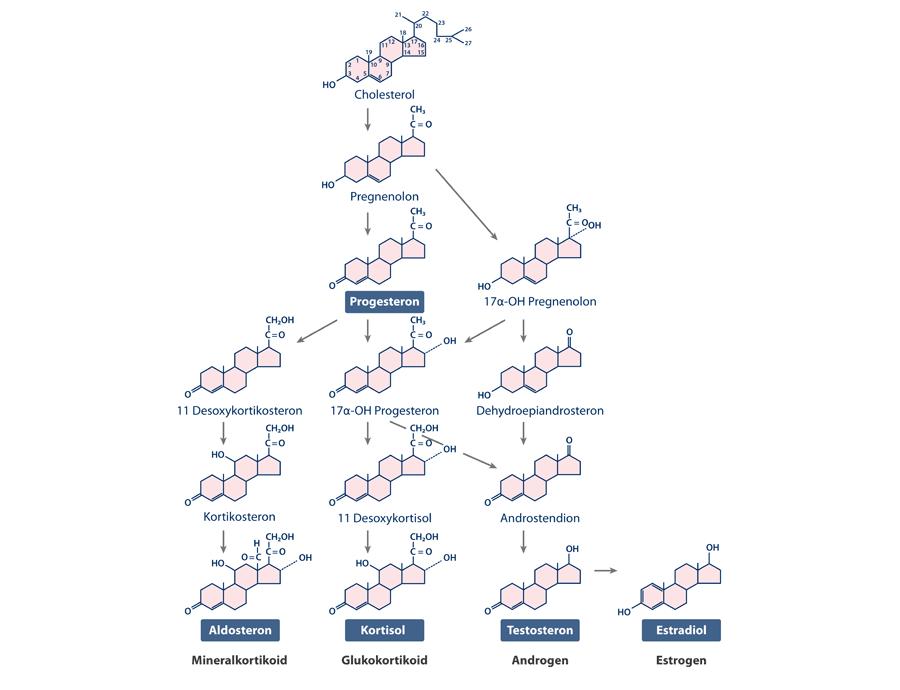 Chemischer Aufbau von Progesteron