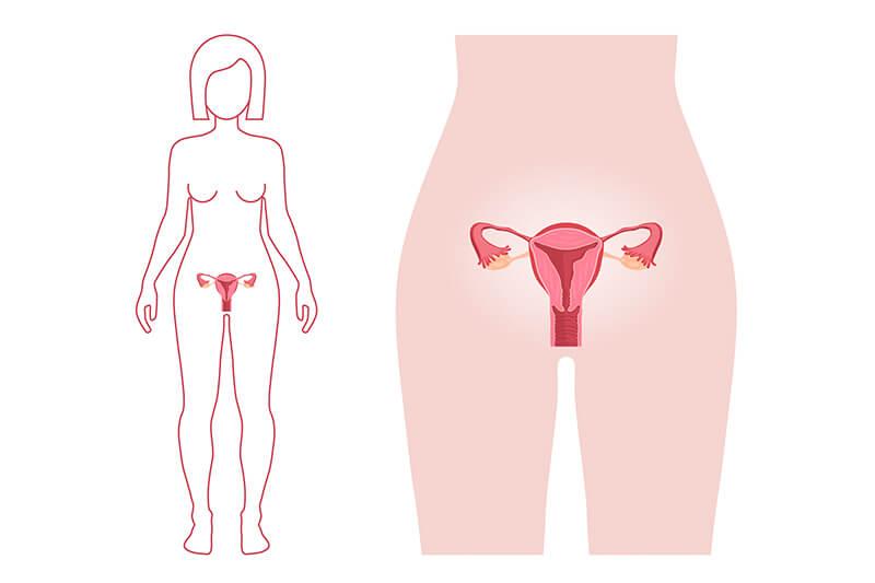 Progesteron wirkt auf die Gebärmutter