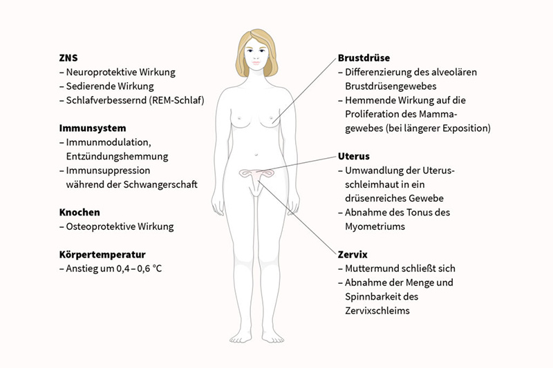 Funktionen von Progesteron im weiblichen Körper