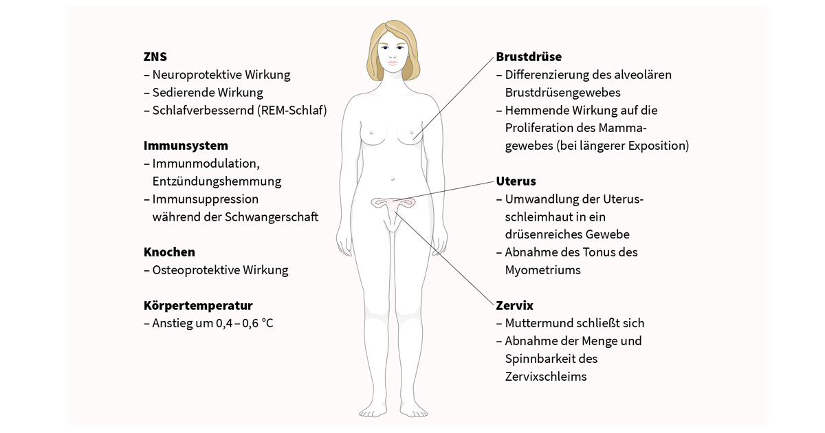 Progesteron Brustschmerzen